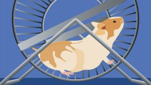 hamster-exercise-wheel-t